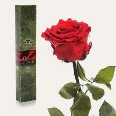 Долгосвежая роза в подарочной упаковке FLORICH Алый Рубин (7 карат на среднем стебле)