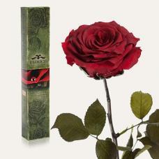 Долгосвежая роза в подарочной упаковке FLORICH Багровый Гранат (5 карат на коротком стебле)