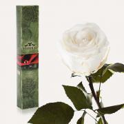 Долгосвежая роза в подарочной упаковке FLORICH Белый Бриллиант (5 карат на среднем стебле)