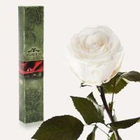 Долгосвежая роза в подарочной упаковке FLORICH Белый Бриллиант (5 карат на коротком стебле)