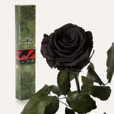 Долгосвежая роза в подарочной упаковке FLORICH Черный Бриллиант (7 карат на коротком стебле)