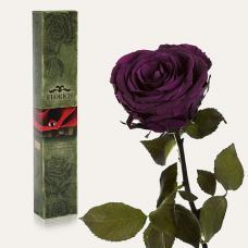 Долгосвежая роза в подарочной упаковке FLORICH Фиолетовый Аметист (7 карат на коротком стебле)