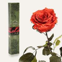 Долгосвежая роза в подарочной упаковке FLORICH Кофейный Топаз (7 карат на среднем стебле)