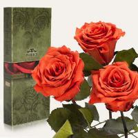 Три долгосвежие розы в подарочной упаковке FLORICH Кофейный Топаз (7 карат на коротком стебле)