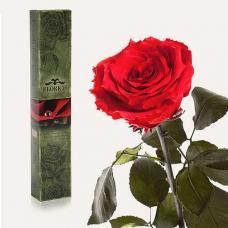 Долгосвежая роза в подарочной упаковке FLORICH Красный Рубин (7 карат на среднем стебле)