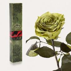 Долгосвежая роза в подарочной упаковке FLORICH Лаймовый Нефрит (5 карат на коротком стебле)