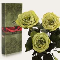 Три долгосвежие розы в подарочной упаковке FLORICH Лаймовый Нефрит (5 карат на коротком стебле)