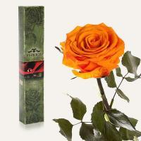 Долгосвежая роза в подарочной упаковке FLORICH Оранжевый Цитрин (7 карат на коротком стебле)