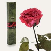Долгосвежая роза в подарочной упаковке FLORICH Розовый Коралл (7 карат на коротком стебле)