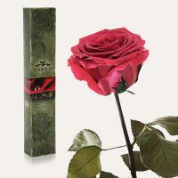 Долгосвежая роза в подарочной упаковке FLORICH Розовый Коралл (5 карат на коротком стебле)
