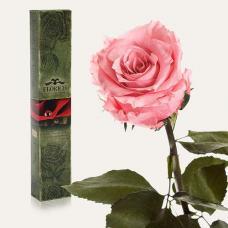 Долгосвежая роза в подарочной упаковке FLORICH Розовый Кварц (5 карат на коротком стебле)