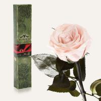 Долгосвежая роза в подарочной упаковке FLORICH Розовый Жемчуг (7 карат на коротком стебле)