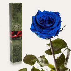 Долгосвежая роза в подарочной упаковке FLORICH Синий Сапфир (7 карат на среднем стебле)