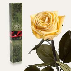 Долгосвежая роза в подарочной упаковке FLORICH Желтый Топаз (7 карат на коротком стебле)