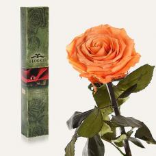 Долгосвежая роза в подарочной упаковке FLORICH Золотистый Хризоберилл (7 карат на коротком стебле)